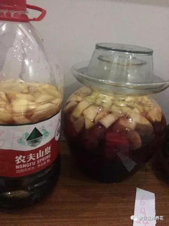 1斤烂苹果烂葡萄,丢盆里,花像吃了药,开花刹不住闸疯长!