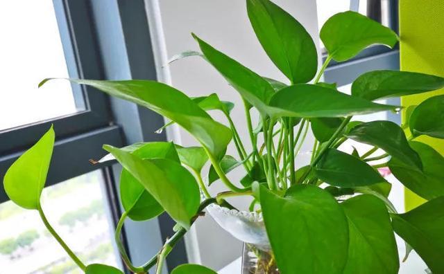 这6盆花家里一放,增湿还除尘,比加湿器还管用!
